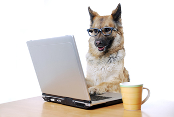 anspringen bei hunden abgewöhnen